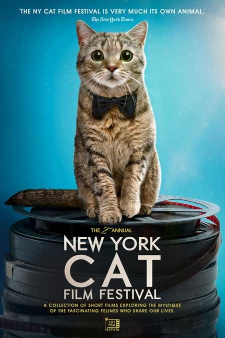 NY Cat Film Festival , Sedona International Film Festival