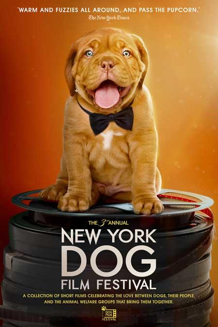 DOG-FILM-FESTIVAL_poster