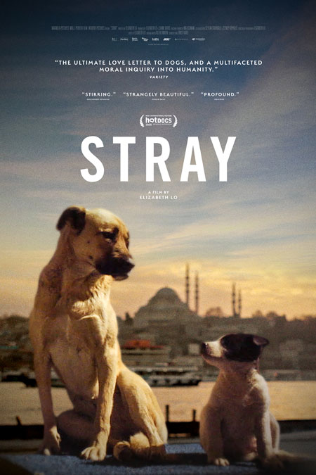 Stray-poster